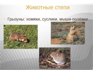 Животные степи Грызуны: хомяки, суслики, мыши-полёвки