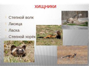 хищники Степной волк Лисица Ласка Степной хорёк