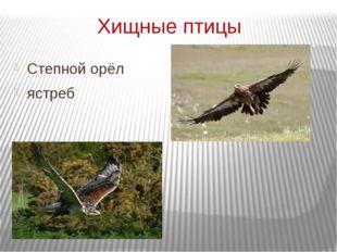 Хищные птицы Степной орёл ястреб