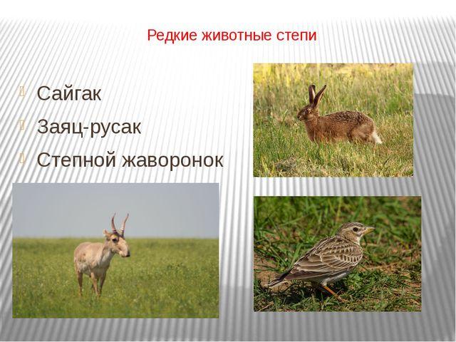 Редкие животные степи Сайгак Заяц-русак Степной жаворонок