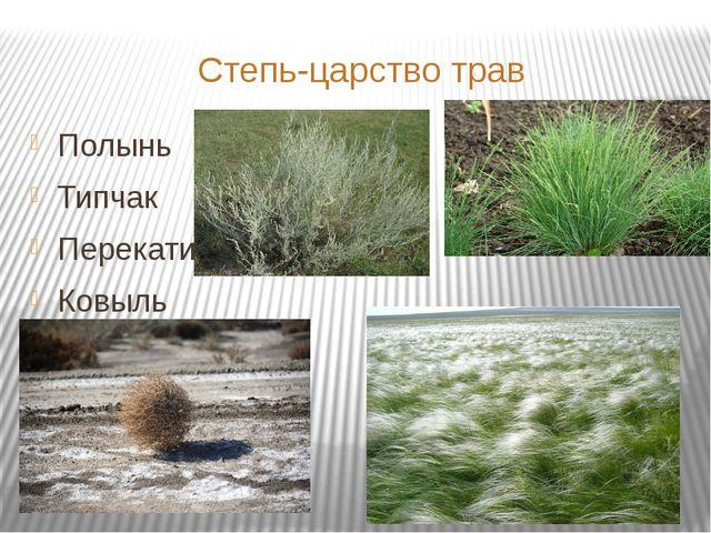 Степь-царство трав Полынь Типчак Перекати-поле Ковыль