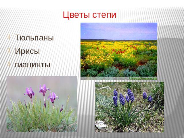Цветы степи Тюльпаны Ирисы гиацинты