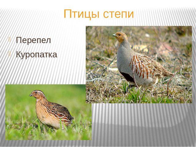 Птицы степи Перепел Куропатка