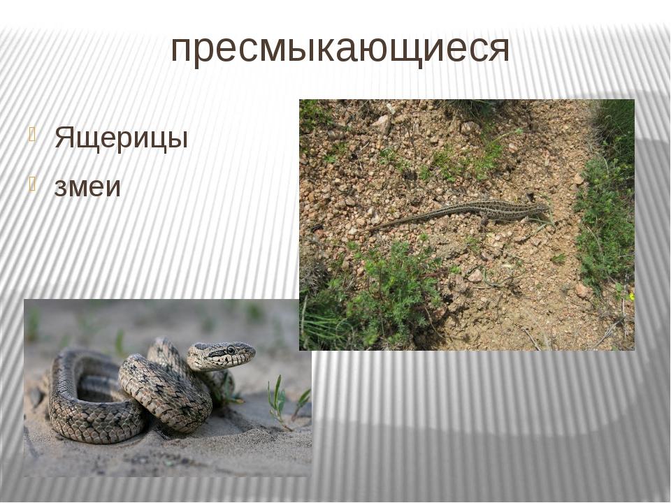 пресмыкающиеся Ящерицы змеи