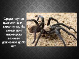 Среди пауков долгожители – тарантулы. Их самки при некотором везении доживаю
