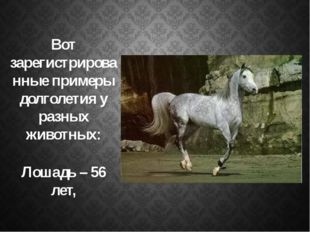 Вот зарегистрированные примеры долголетия у разных животных: Лошадь – 56 лет,