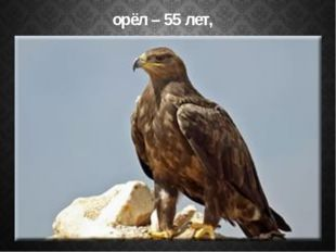 орёл – 55 лет,