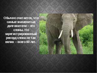 Обычно считается, что самые знаменитые долгожители – это слоны. Но зарегистр