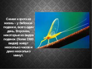 Самая короткая жизнь – у бабочки-поденки, всего один день. Впрочем, некоторы