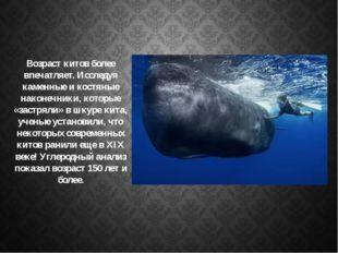 Возраст китов более впечатляет. Исследуя каменные и костяные наконечники, кот