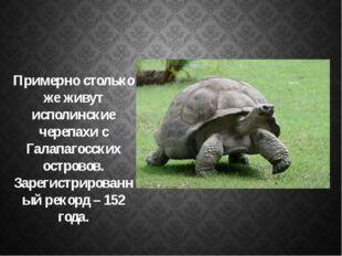 Примерно столько же живут исполинские черепахи с Галапагосских островов. Зар