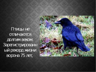 Птицы не отличаются долгим веком. Зарегистрированный рекорд жизни ворона 75