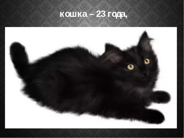 кошка – 23 года,
