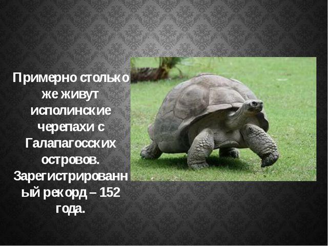 Примерно столько же живут исполинские черепахи с Галапагосских островов. Зар...