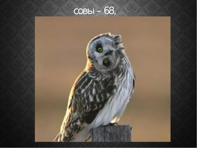 совы – 68,