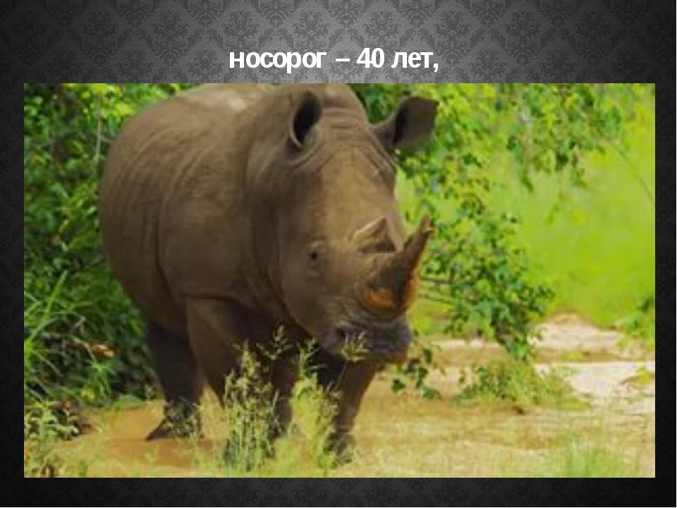 носорог – 40 лет,