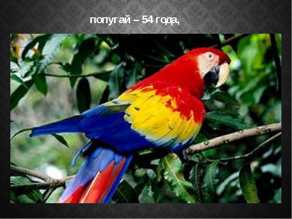 попугай – 54 года,