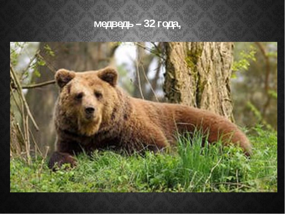 медведь – 32 года,