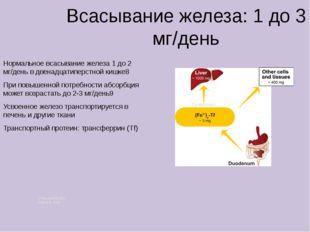 Всасывание железа: 1 до 3 мг/день Нормальное всасывание железа 1 до 2 мг/ден