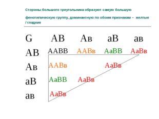 Стороны большого треугольника образуют самую большую фенотипическую группу, д
