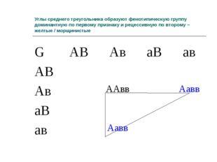 Углы среднего треугольника образуют фенотипическую группу доминантную по перв