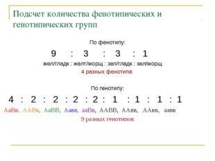 Подсчет количества фенотипических и генотипических групп По фенотипу: 9 : 3 :