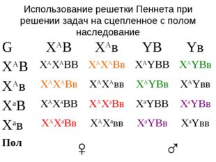 Использование решетки Пеннета при решении задач на сцепленное с полом наследо
