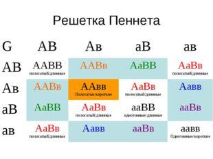Решетка Пеннета GАВАваВав АВААВВ полосатый/длинныеААВвАаВВАаВв полоса
