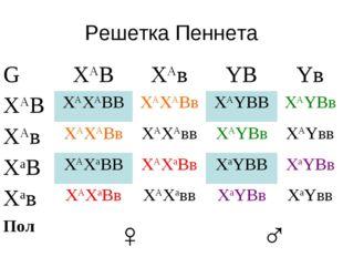 Решетка Пеннета GXАВXАвYВYв XАВXАXАВВXАXАВвXАYВВXАYВв XАвXАXАВвXАXА