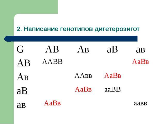 2. Написание генотипов дигетерозигот GАВАваВав АВААВВАаВв АвААввАа...