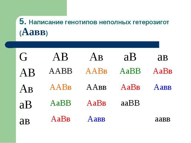 5. Написание генотипов неполных гетерозигот (Аавв) GАВАваВав АВААВВААВв...