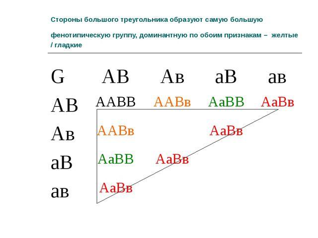 Стороны большого треугольника образуют самую большую фенотипическую группу, д...