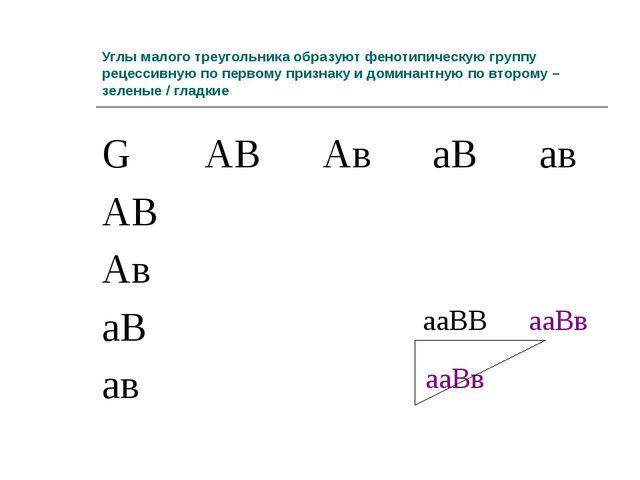 Углы малого треугольника образуют фенотипическую группу рецессивную по первом...