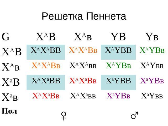Решетка Пеннета GXАВXАвYВYв XАВXАXАВВXАXАВвXАYВВXАYВв XАвXАXАВвXАXА...