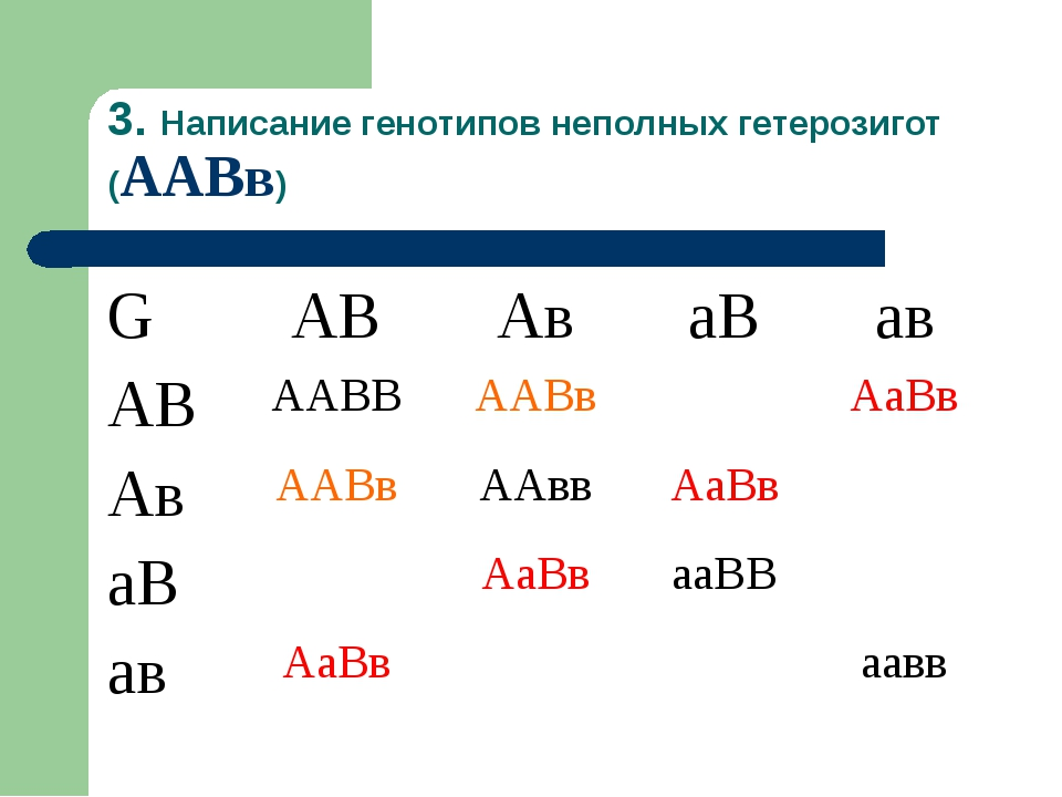 3. Написание генотипов неполных гетерозигот (ААВв) GАВАваВав АВААВВААВв...
