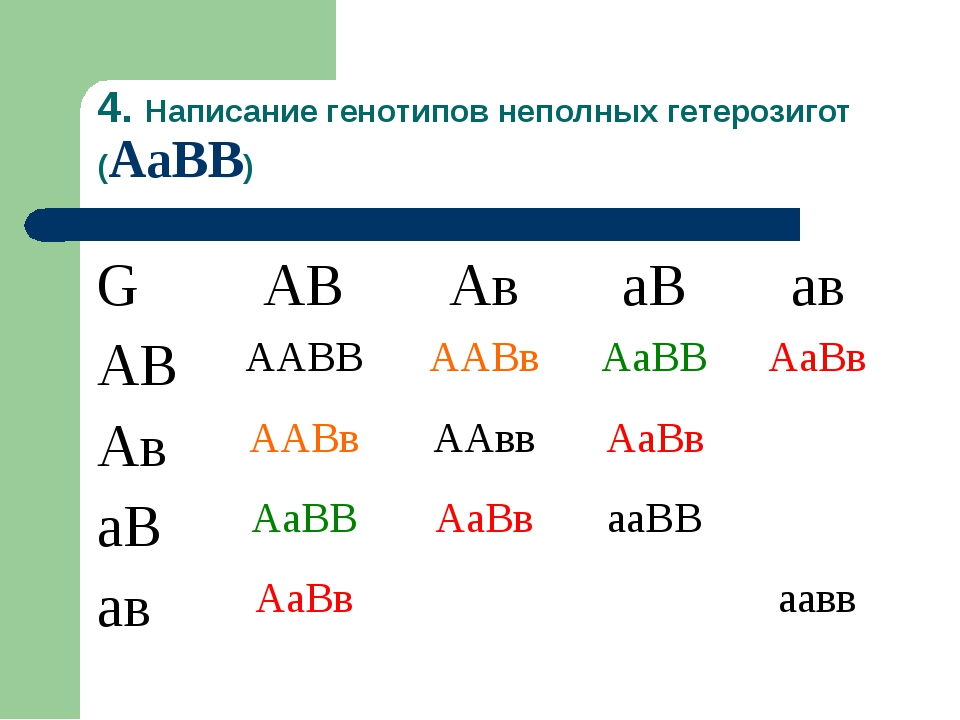 4. Написание генотипов неполных гетерозигот (АаВВ) GАВАваВав АВААВВААВв...