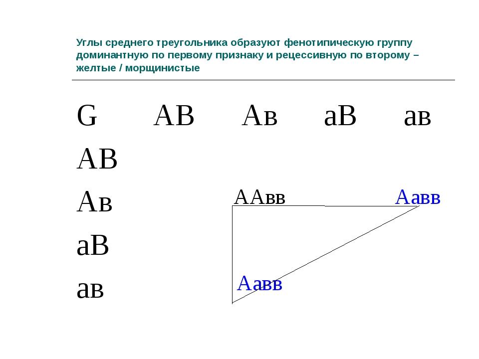 Углы среднего треугольника образуют фенотипическую группу доминантную по перв...