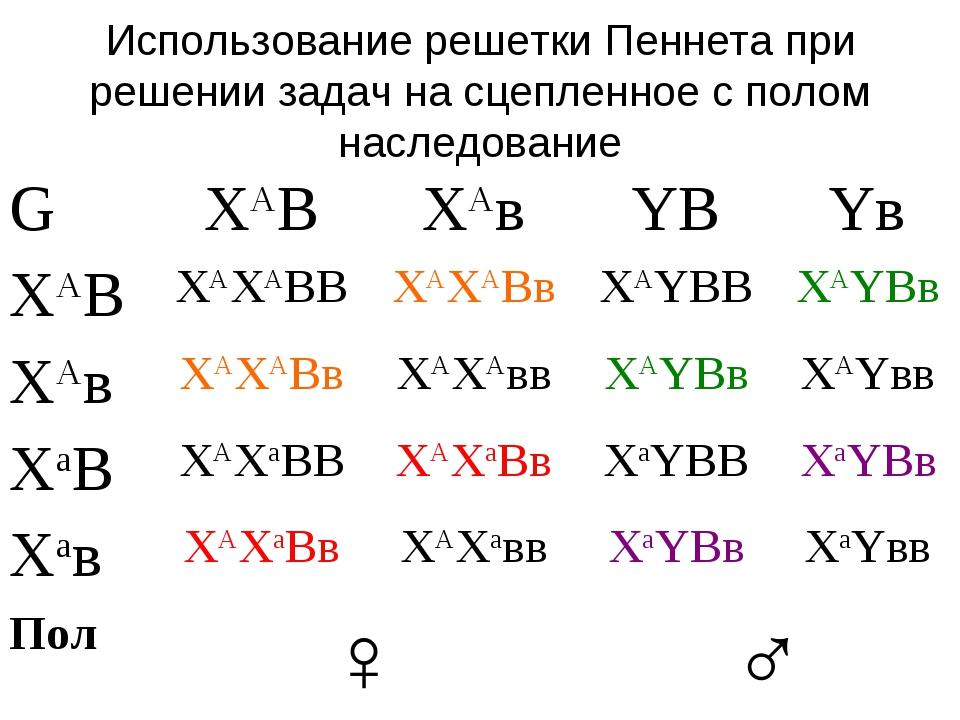Использование решетки Пеннета при решении задач на сцепленное с полом наследо...