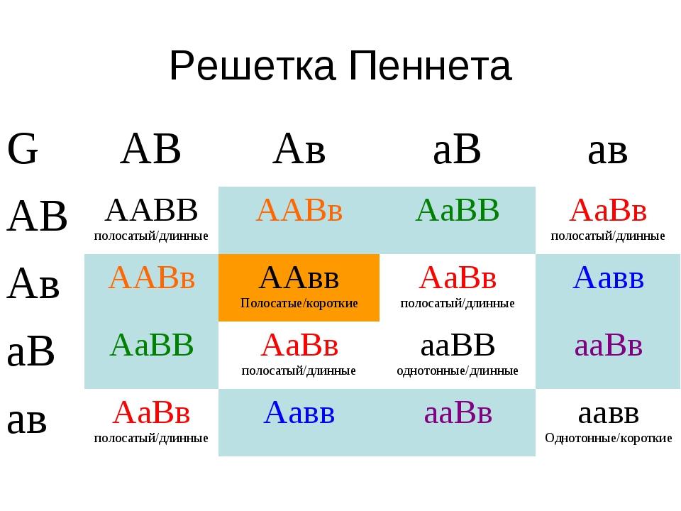 Решетка Пеннета GАВАваВав АВААВВ полосатый/длинныеААВвАаВВАаВв полоса...