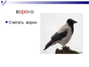 ворона Считать ворон
