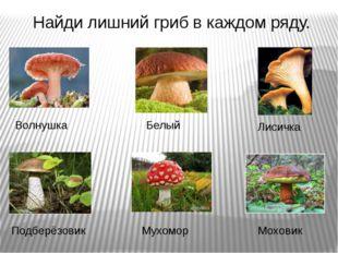 Найди лишний гриб в каждом ряду. Волнушка Белый Лисичка Подберёзовик Мухомор