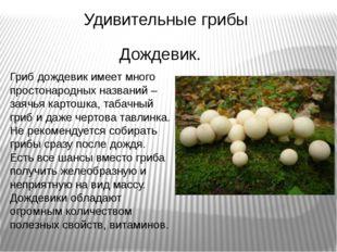 Удивительные грибы Гриб дождевик имеет много простонародных названий – заячья