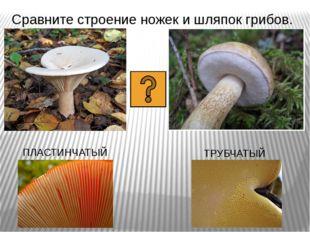 Сравните строение ножек и шляпок грибов. ПЛАСТИНЧАТЫЙ ТРУБЧАТЫЙ
