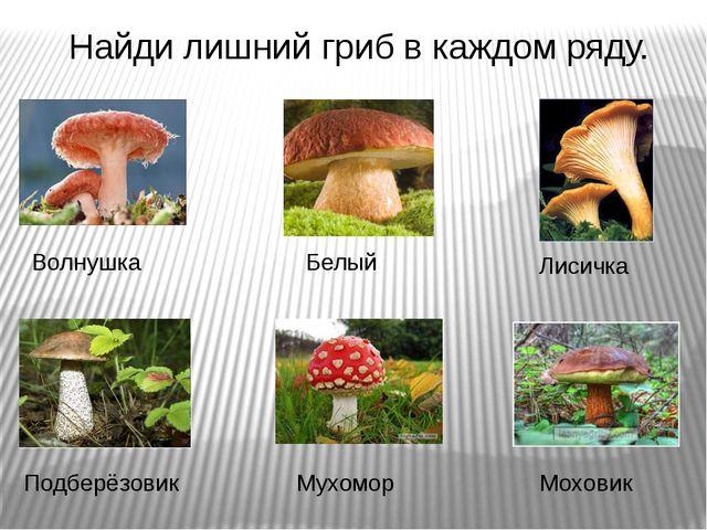 Найди лишний гриб в каждом ряду. Волнушка Белый Лисичка Подберёзовик Мухомор...