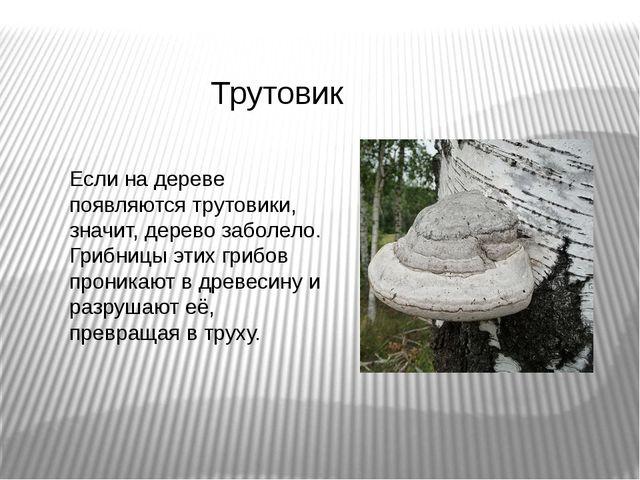 Трутовик Если на дереве появляются трутовики, значит, дерево заболело. Грибни...