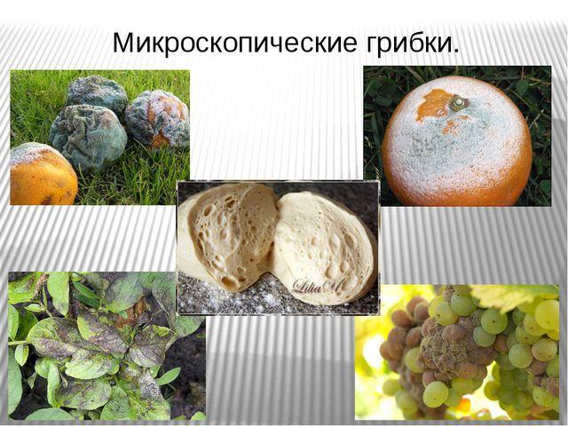 Микроскопические грибки.