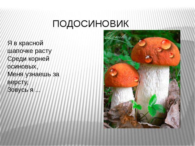 Я в красной шапочке расту Среди корней осиновых, Меня узнаешь за версту, З...