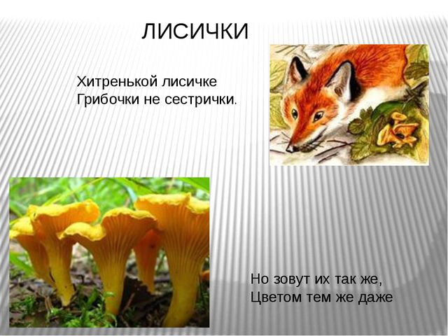 Хитренькой лисичке Грибочки не сестрички. Но зовут их так же, Цветом тем же д...