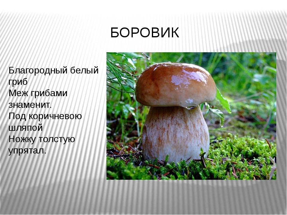 Благородный белый гриб Меж грибами знаменит. Под коричневою шляпой Ножку толс...