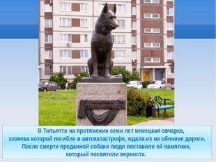 В Тольятти на протяжении семи лет немецкая овчарка, хозяева которой погибли